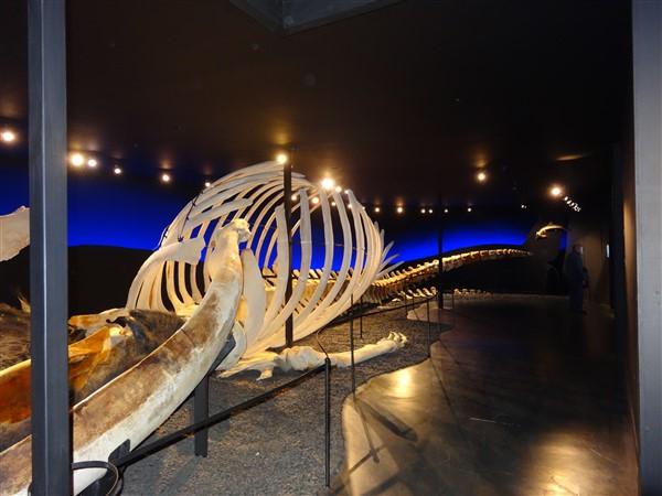Walvismuseum Husavík