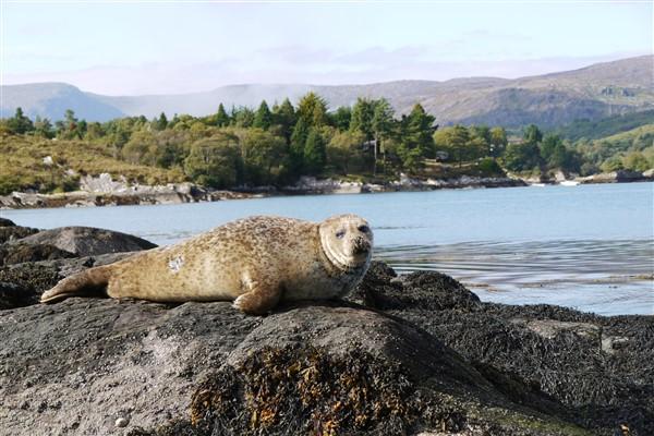 De Ierse kust is vol verrassingen en schoonheid.